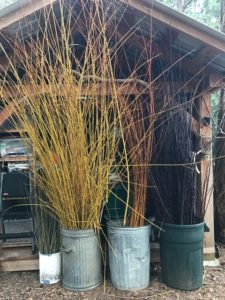 winter branches to sort