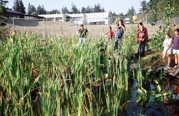 Gathering Cattails at Suquamish Basket Marsh