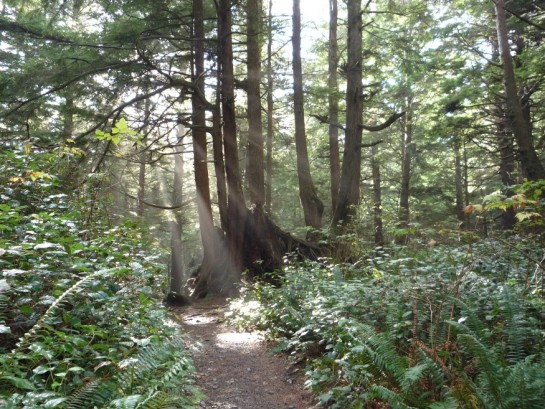 Gifts of the Pacific Northwest Forests