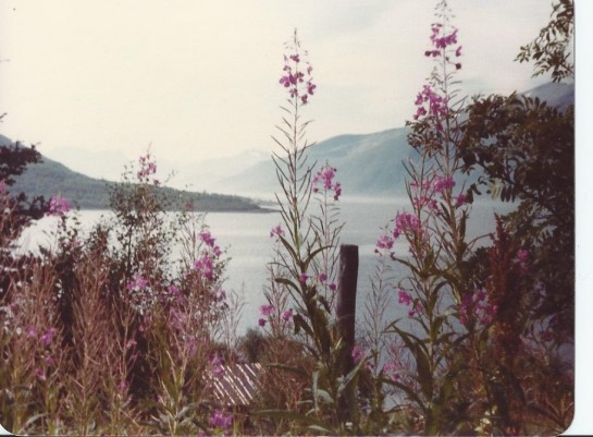 1978 fireweed, Kvaeoy, Norway