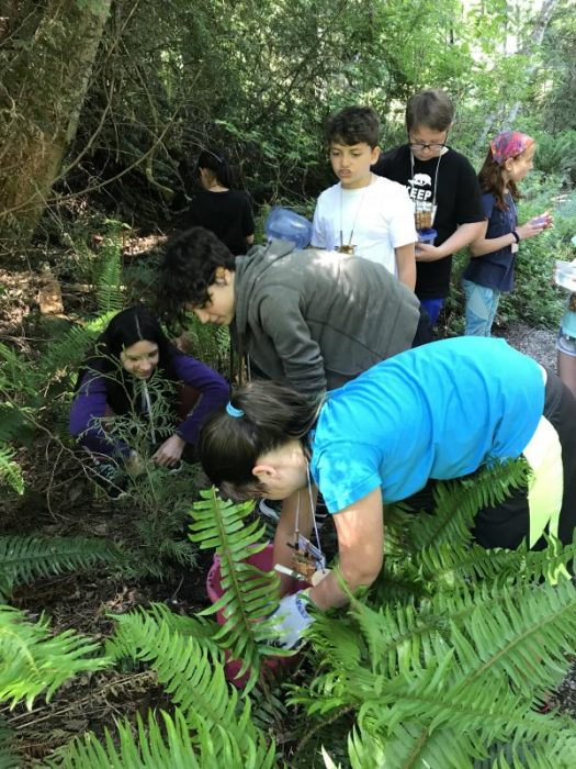Students plant young Cedar Trees